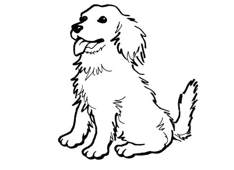 coloring pages of collie dogs collie coloring page