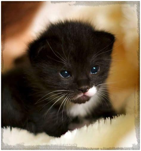 imagenes de amor de gatitos animados gatitos peque 241 os en dibujos archivos gatitos tiernos