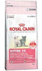 Cat Food Makanan Kucing Royal Canin Babycat 195 Gram jual kucing royal canin