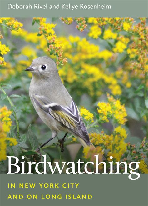 birdwatching in new york city and on long island wildtones