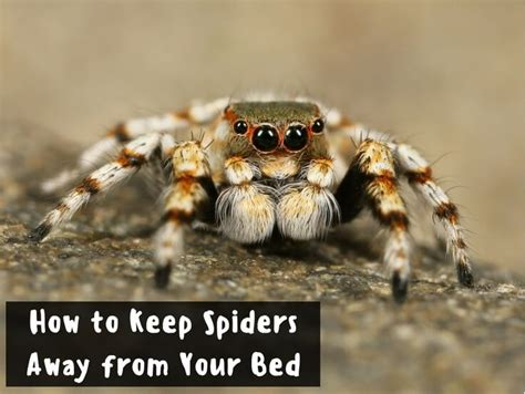 How To Keep Spiders Away From Your Bed how to keep spiders away from your bed for your