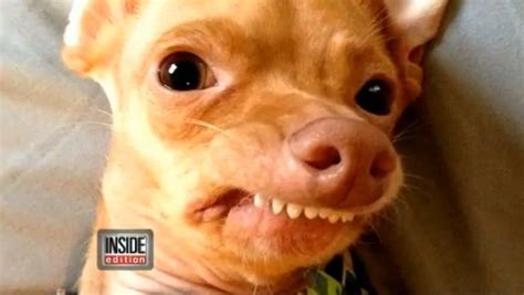 is tuna bad for dogs tuna once abandoned with severe overbite turns into viral sensation to be