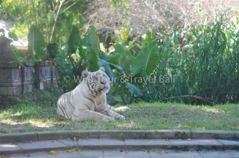 Safari Anak Bali Safari Marine Park bali safari marine park tempat wisata di bali untuk anak