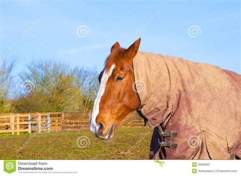 Field Mats Horses For Sale by In Field Wearing Rug Stock Photography Image