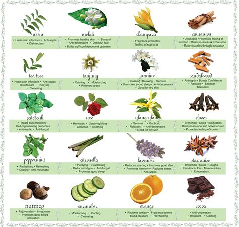 herbs chart aromatherapy part 1 how it works a real food lover
