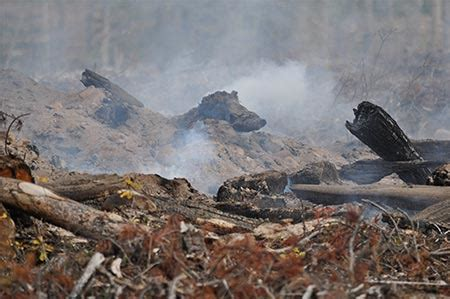 habitat destruction  moose country