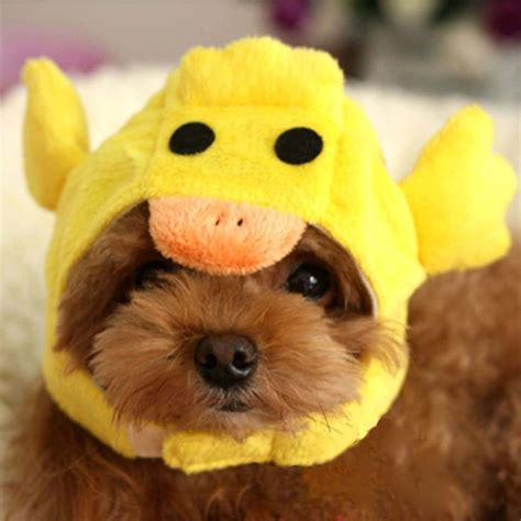 beanies for dogs adorable hats for dogs well done stuff