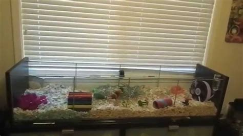 Rabbit Cage Hutch Ikea Detolf Hamster Cage Youtube