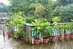 plastic planters in sun
