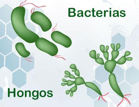 cadena alimenticia hongos y bacterias aula365 aulaland