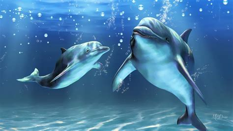 secrets the dolphin smile 25 amazing things dolphins do books 24 gorgeous collection of dolphin desktop wallpaper