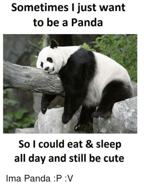 Cute Panda Memes - funny panda memes of 2017 on sizzle followed