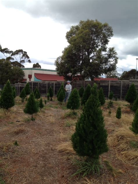 diamond valley christmas tree farm melbourne