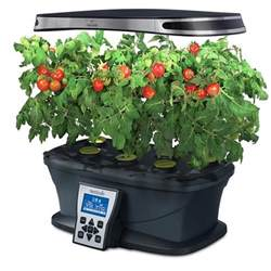 indoor tomato garden indoor tomato garden 1000 1000 ideas about growing