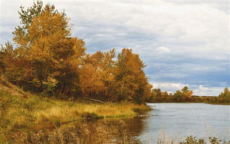 imagenes arboles otoño oro 225 rboles de oto 241 o lago hierba fondos de pantalla oro