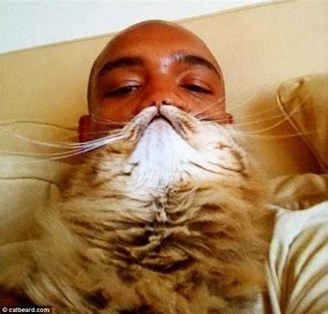 Cat Beard Meme - latest internet meme bearding is the cat s whiskers