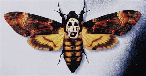 silence of the lambs moth tattoo silence of the lambs mash up between the deaths
