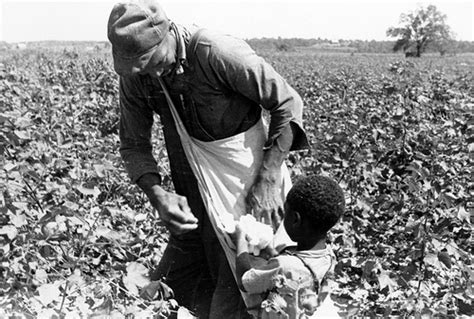a black s journey from cotton picking to college professor lessons about race class and gender in america black studies and critical thinking books a black and boy picking cotton from the image