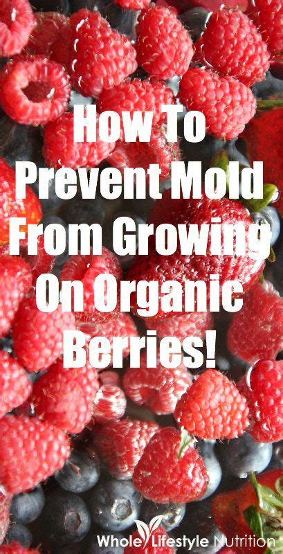 How To Prevent Mold how to prevent mold from growing on organic berries