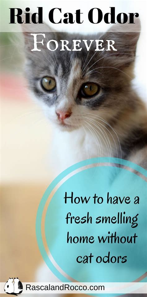 how to get rid of smell in top load washing machine 25 best ideas about cat urine on pet spot