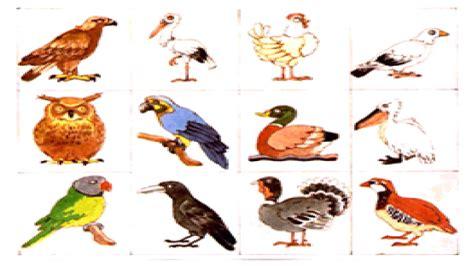 imagenes animales que saltan animales animales