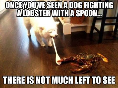 Funny Fighting Memes - dog fighting lobster with spoon funny cute cat and dog