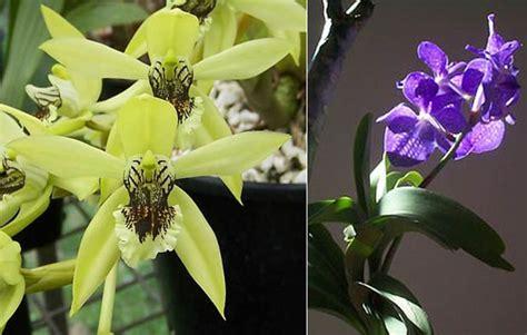 Bunga Hana 5cm 2 mengenal aneka jenis anggrek vanda yang cantik gambar bunga