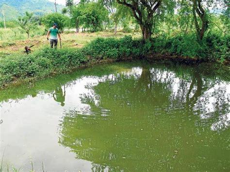 La Tilapia Se Ha Convertido En El Quinto Pescado Ms Consumido En Los | la cr 237 a de tilapia toma fuerza en manab 237 el diario ecuador