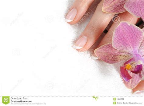 Nature Murals For Walls nail salon wallpaper wallpapersafari