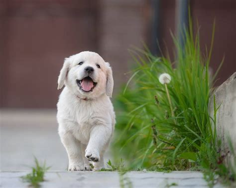 puppy of the day happy national puppy day mnn nature network