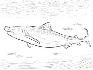 ausmalbild realistischer tigerhai
