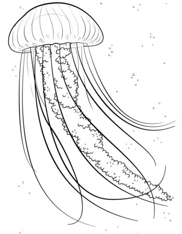 coloring pictures of jelly fish jelly fish coloring page free printable coloring pages