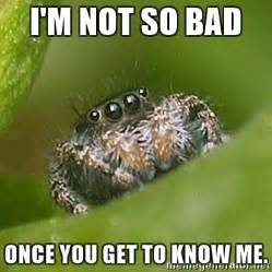 Memes About Spiders - image gallery spider meme