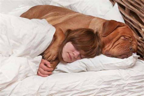How To Cuddle With A In Bed do your dogs demand cuddle time like mine