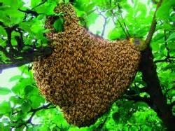 bienen halten im garten oya bienen als netzwerker in der permakultur
