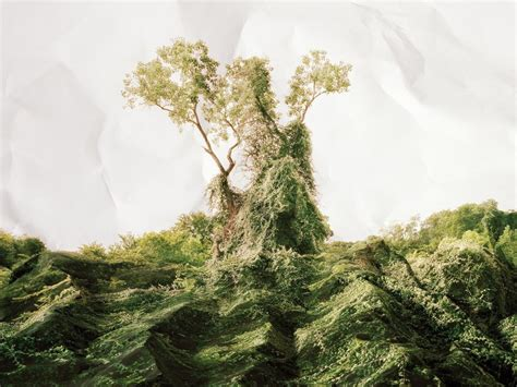 The True Story Of Kudzu The Vine That Never Truly Ate The
