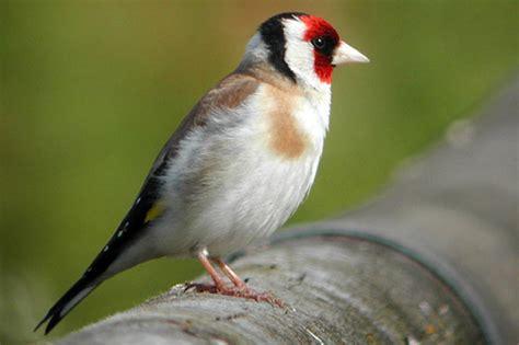 Vogelarten Im Garten by Vogelarten Im Garten Openbm Info