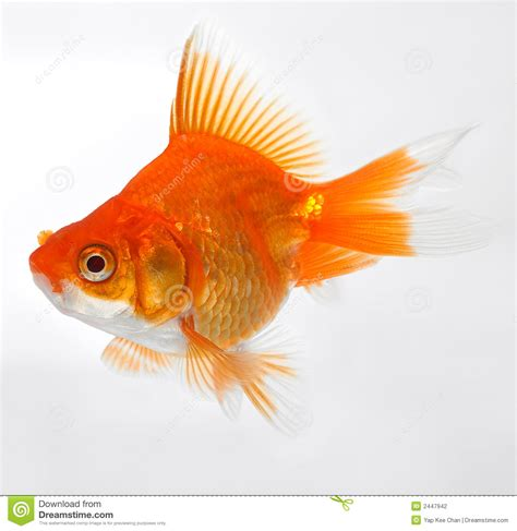 www fish fish pictures kids search