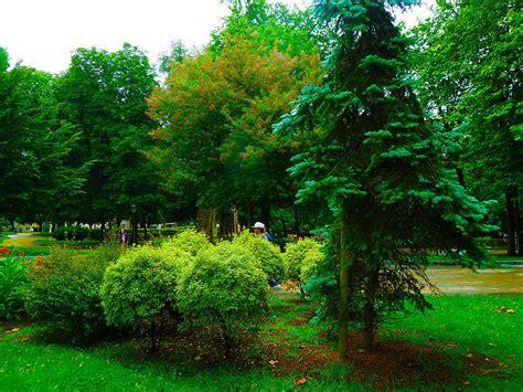 imagenes de flores y arboles estacado de 225 rboles j 243 venes plantas