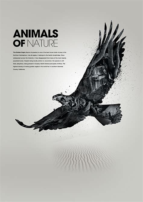 poster design nature animals of nature eagle poster