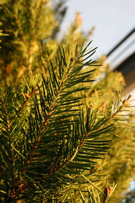 what does put in christmas trees water review ebooks