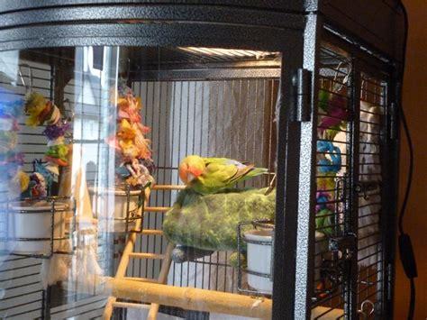best cage best bird cage bird cages
