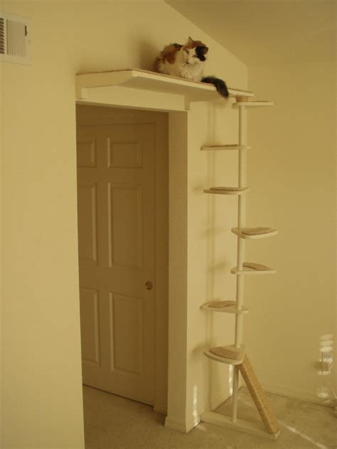 Building A Cat Door by To Buy Or Not To Buy A Cat Tree