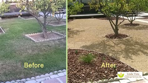 California Backyard Trees by Before After Renovated California Backyard Orchard