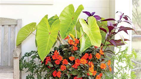 tropical container garden plant a tropical container garden southern living