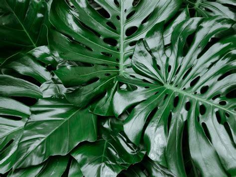 piante da appartamento con poca luce 5 piante d appartamento verdi che vivono con poca luce