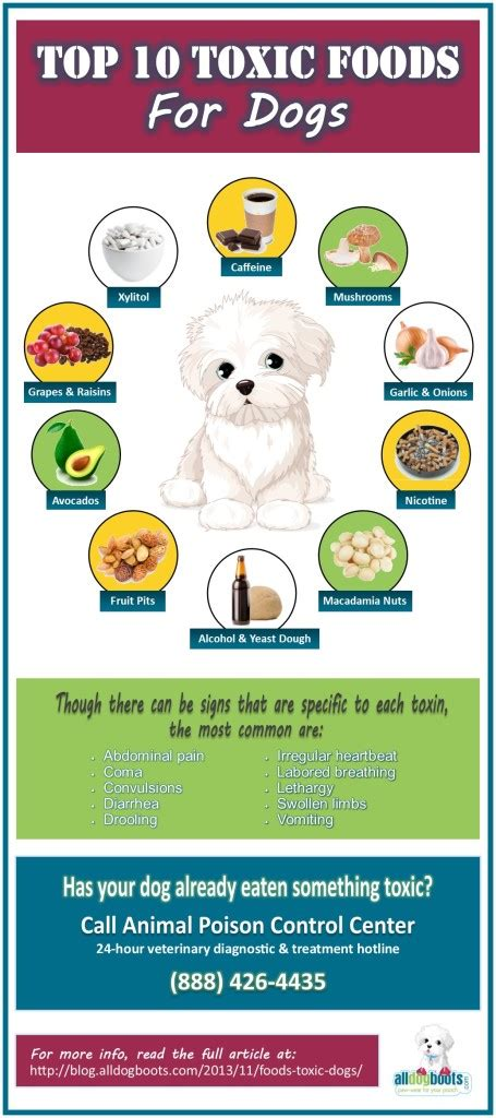 deadly foods for dogs foods that are toxic to dogs 10 foods to avoid