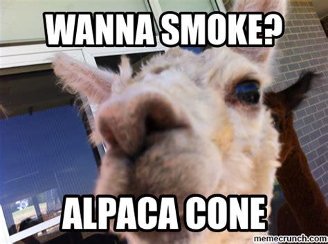 alpaca meme memes