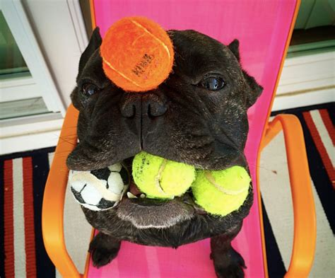neutered still has balls helpful tips for you and your pets