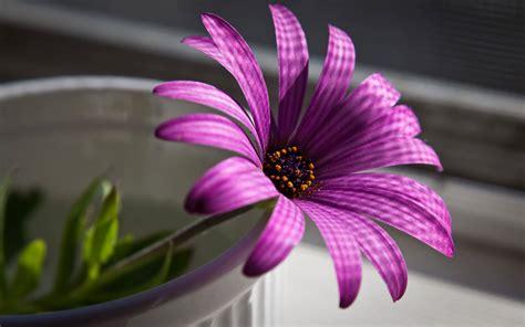 wallpaper flower purple purple flower wallpaper 37742